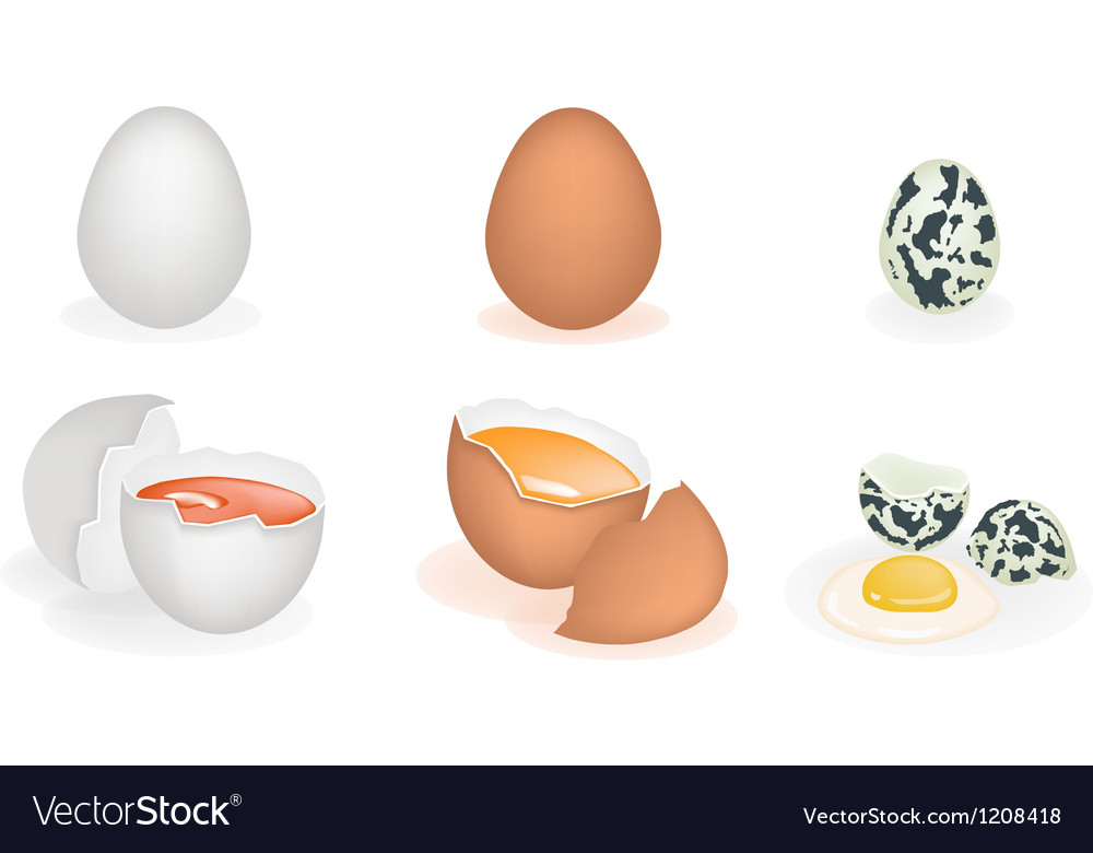 Set of Three Different Eggs vector image