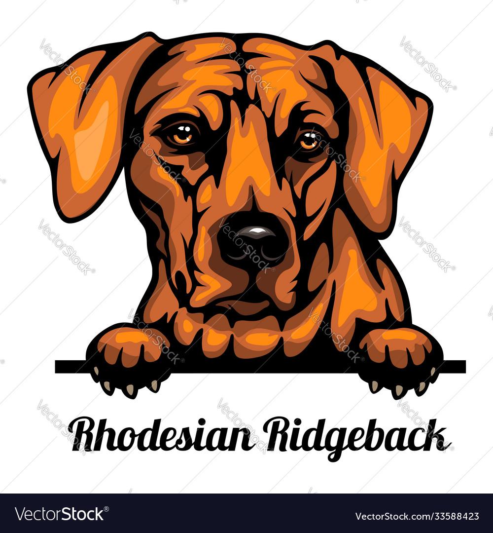 Head rhodesian ridgeback - dog breed color image