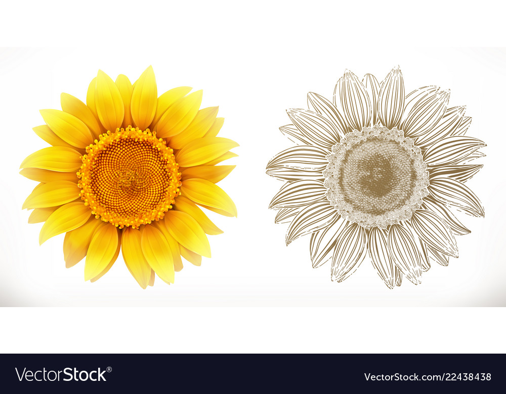 Sunflower 3d realism and engraving styles