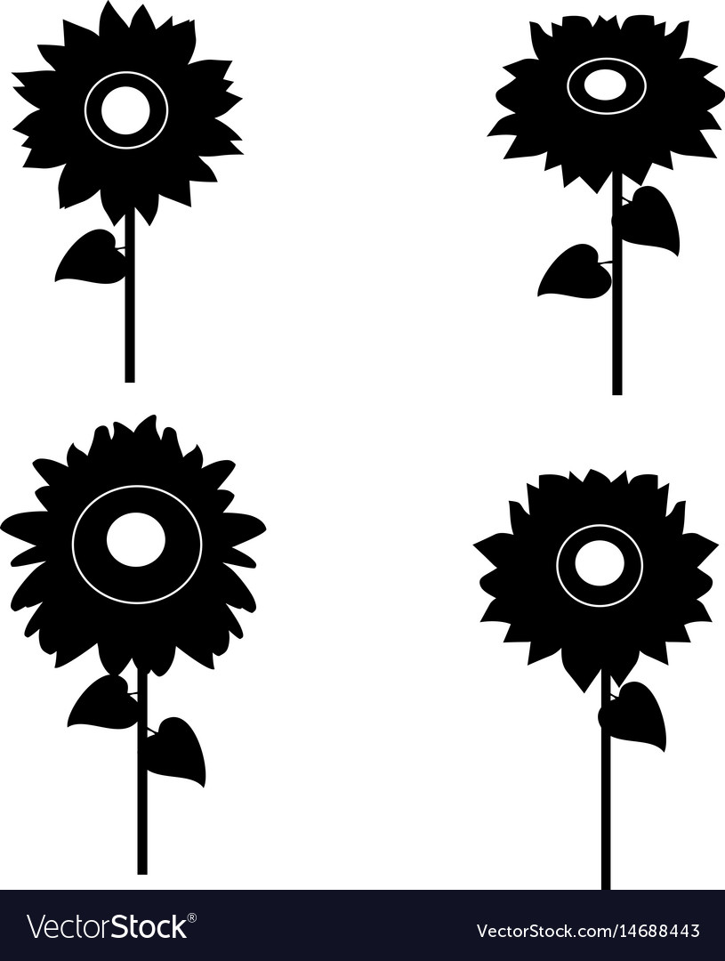 Sunflower Outline Vector - Flowers Healthy