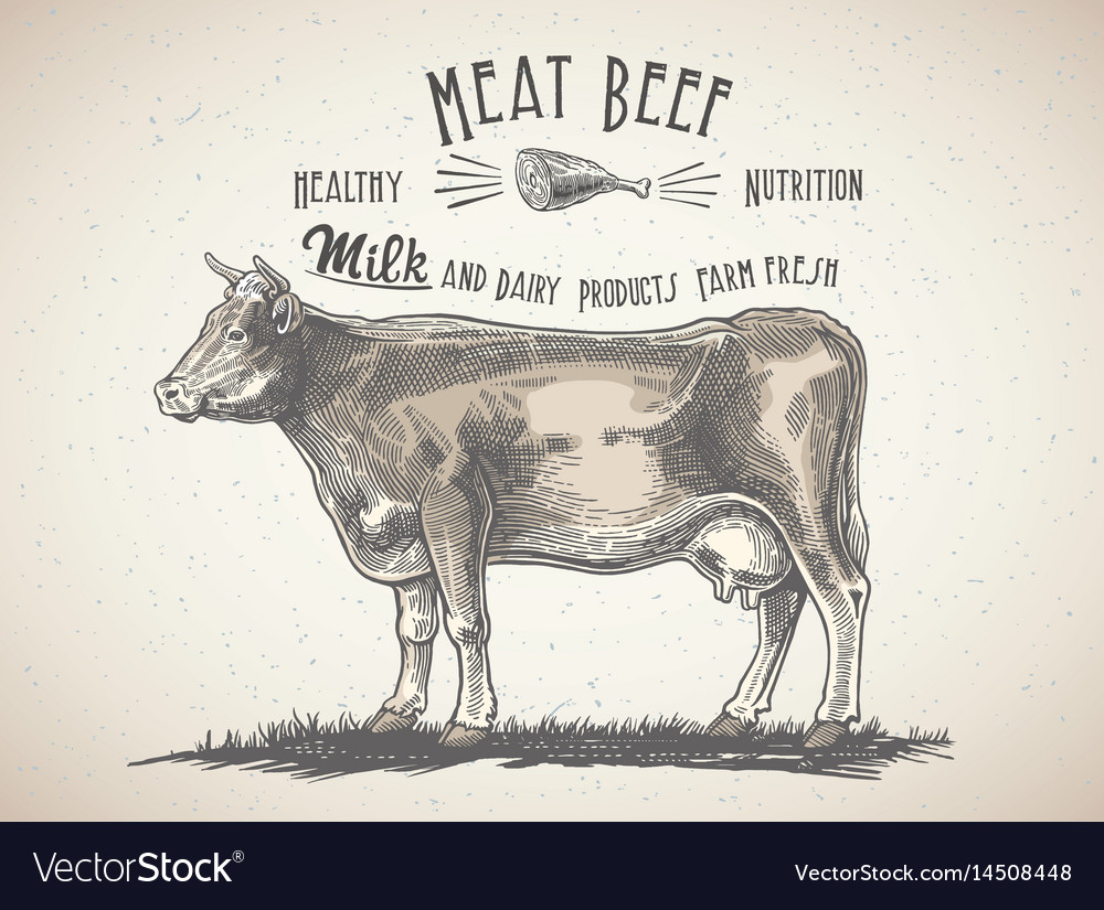 Cow in graphic style and inscriptions drawing by