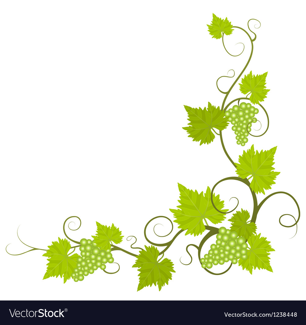 grape vine royalty free vector image vectorstock rh vectorstock com vector free grapevine cine vector free