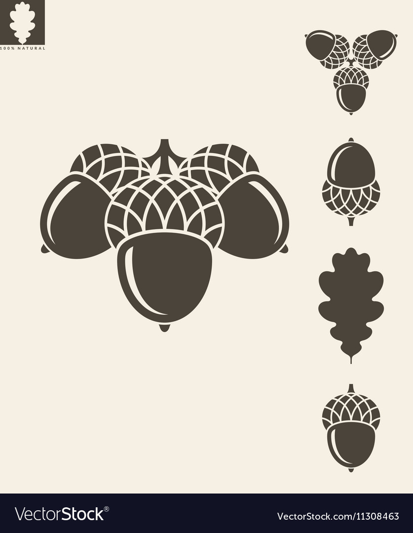 Acorn Oak vector image