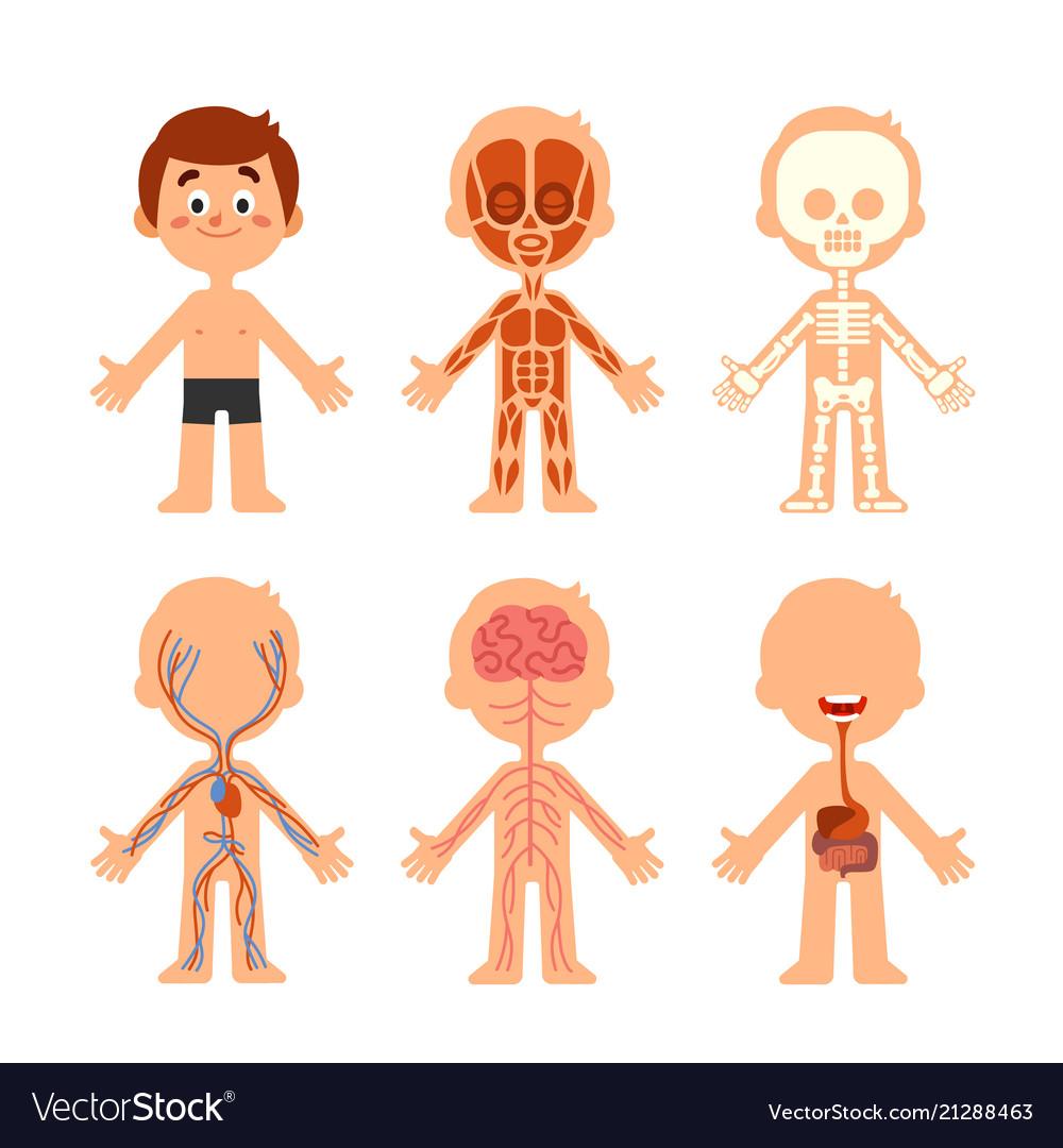 Cartoon boy body anatomy human biology systems