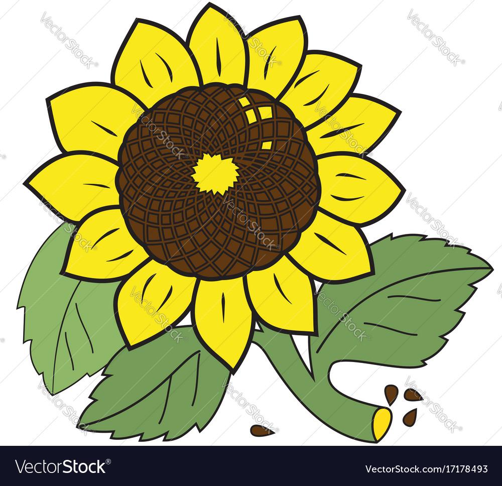 Large ripe sunflower