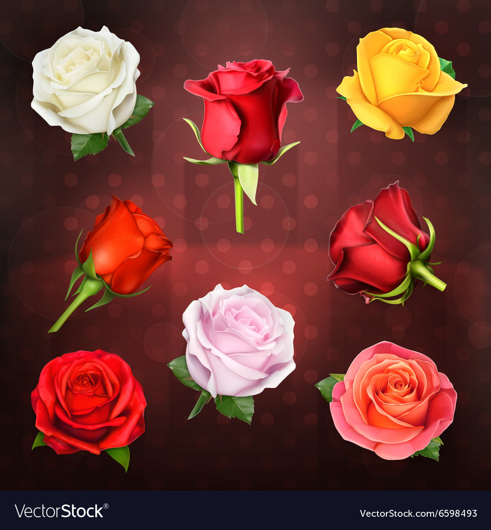 Roses icons vector image