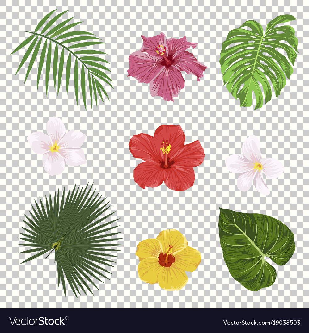 Tropical Leaves And Flowers Icon Set Royalty Free Vector Tropical flowers bring more to your garden: vectorstock