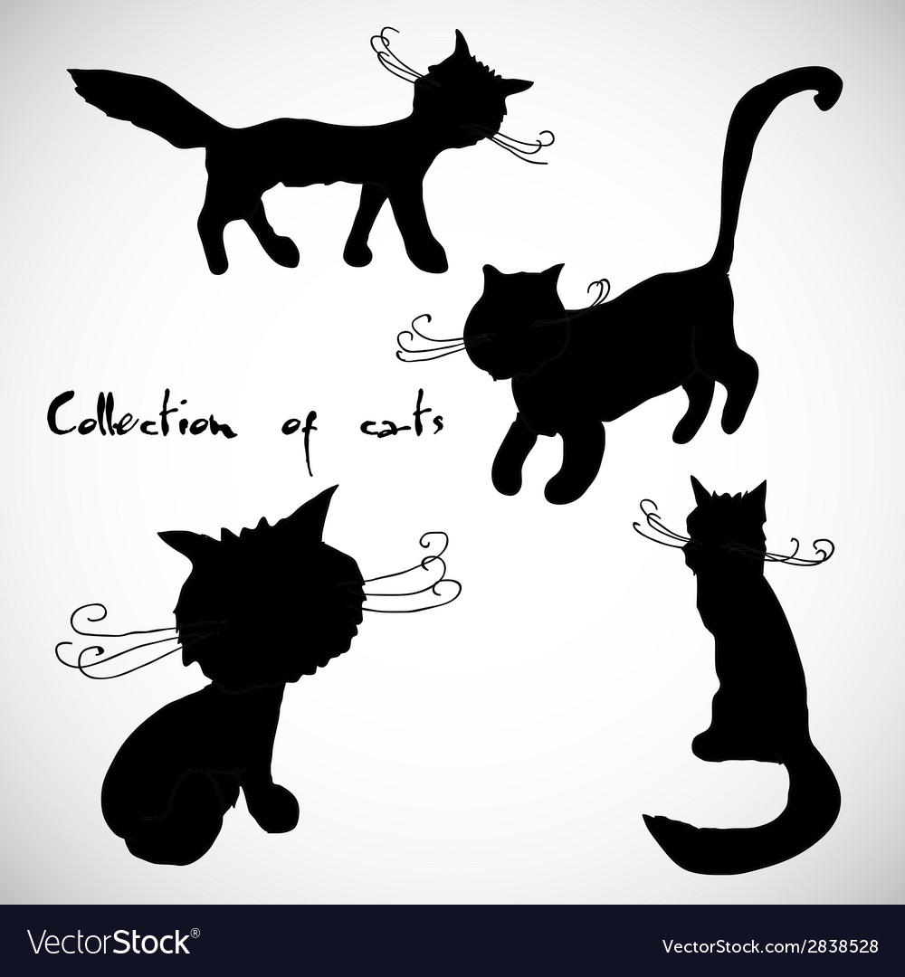 Collection of four cats