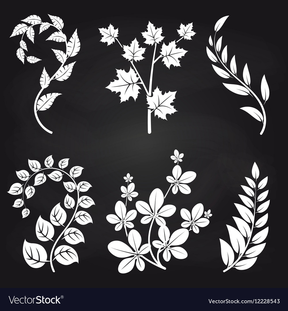 Decorative floral branches on blackboard