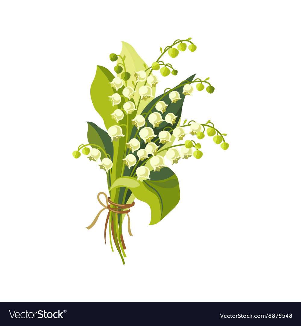 Lily Of The Valley Hand Drawn Realistic