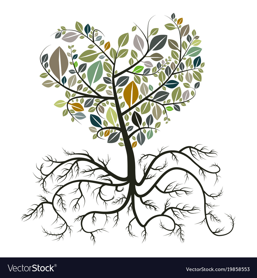 Heart Shaped Tree With Roots Isolated On White Vector Image