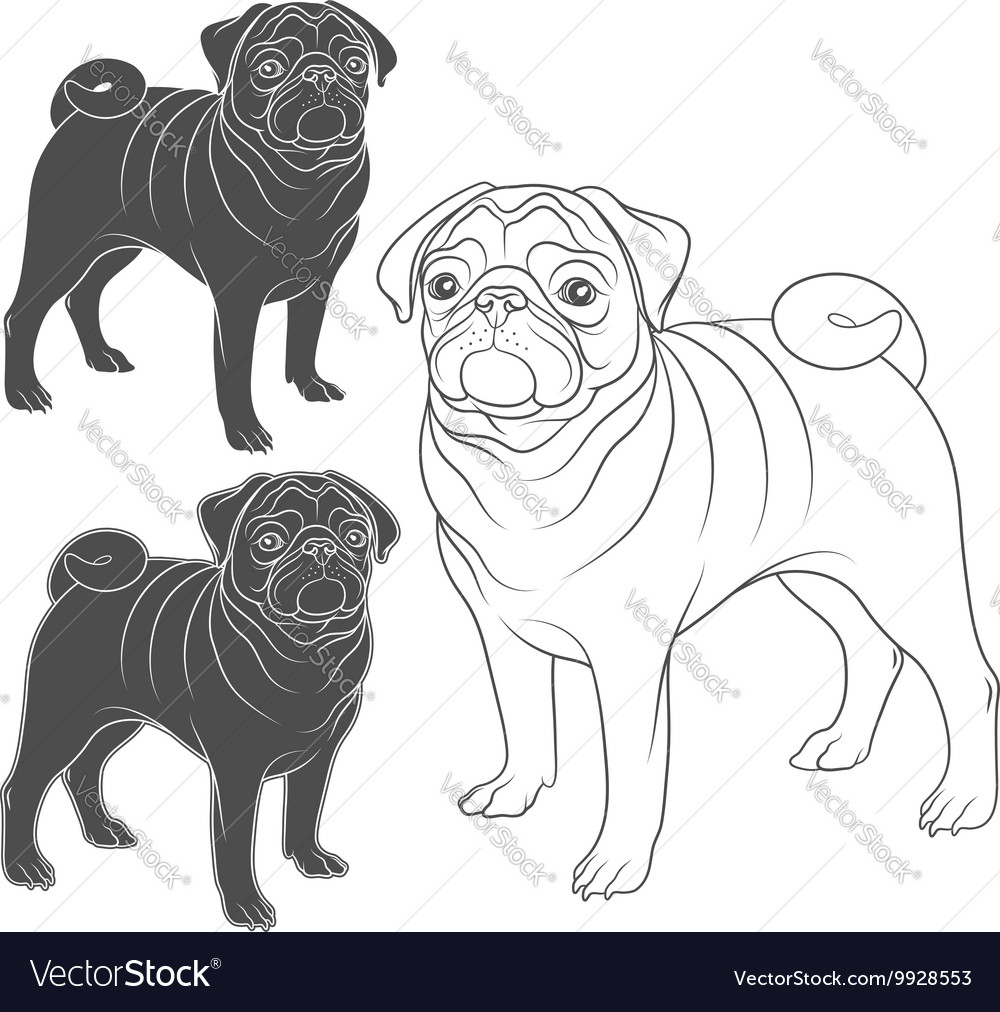 Set of images of pug