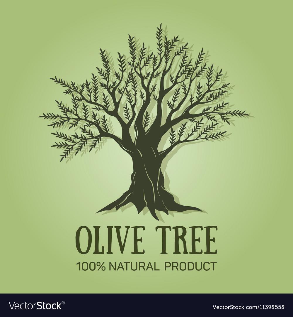 Hand drawn graphic olive tree