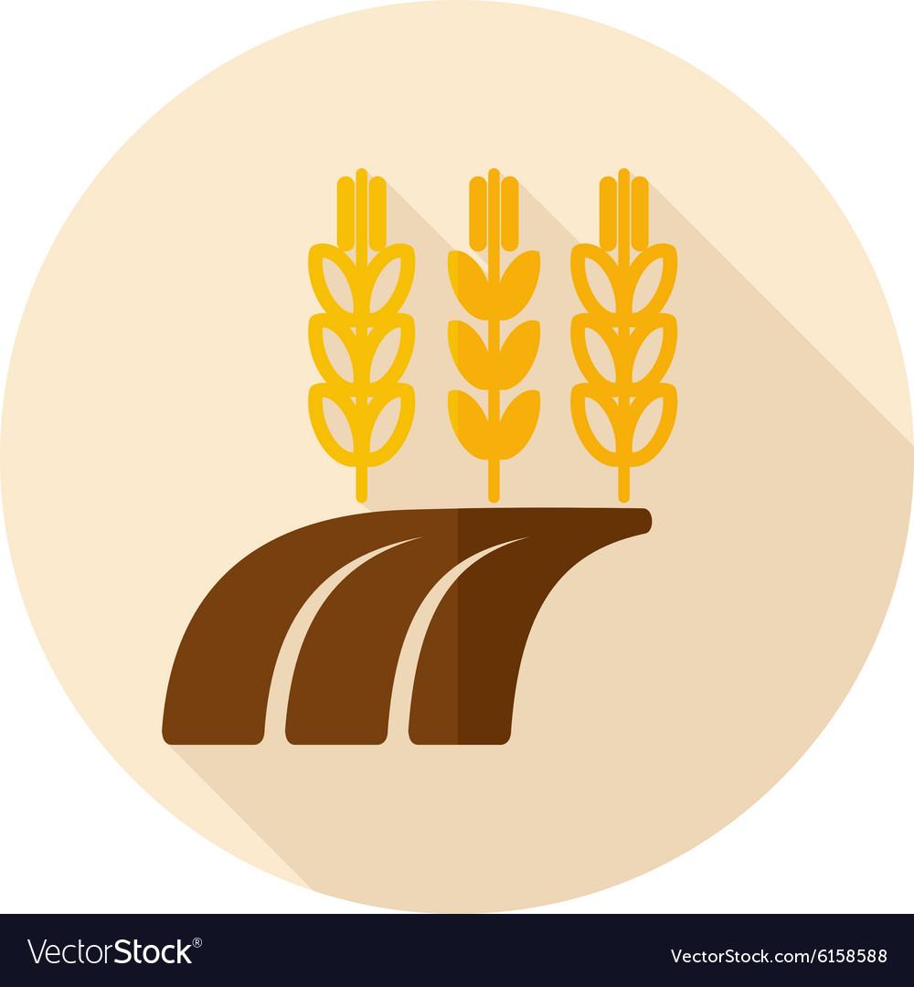 Ears of Wheat Barley or Rye on Field flat icon vector image