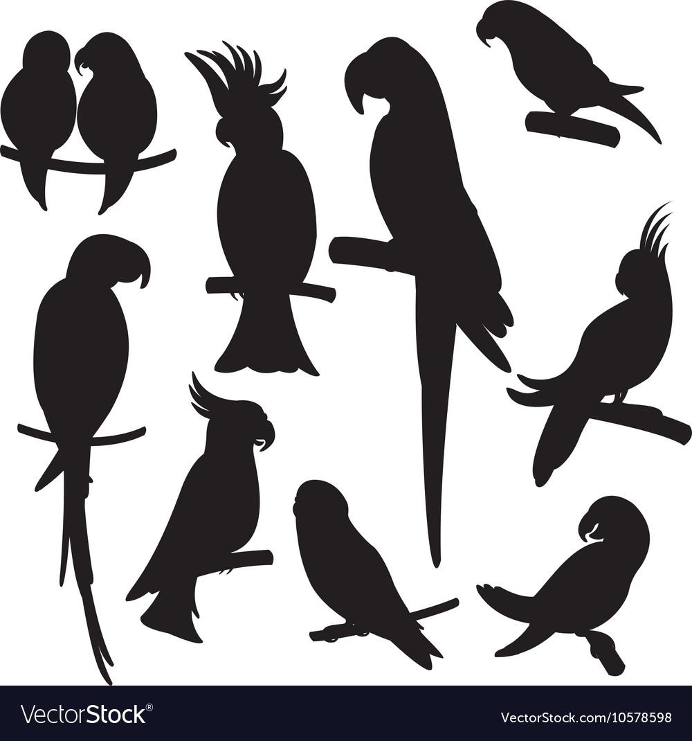 Cartoon parrots set vector image