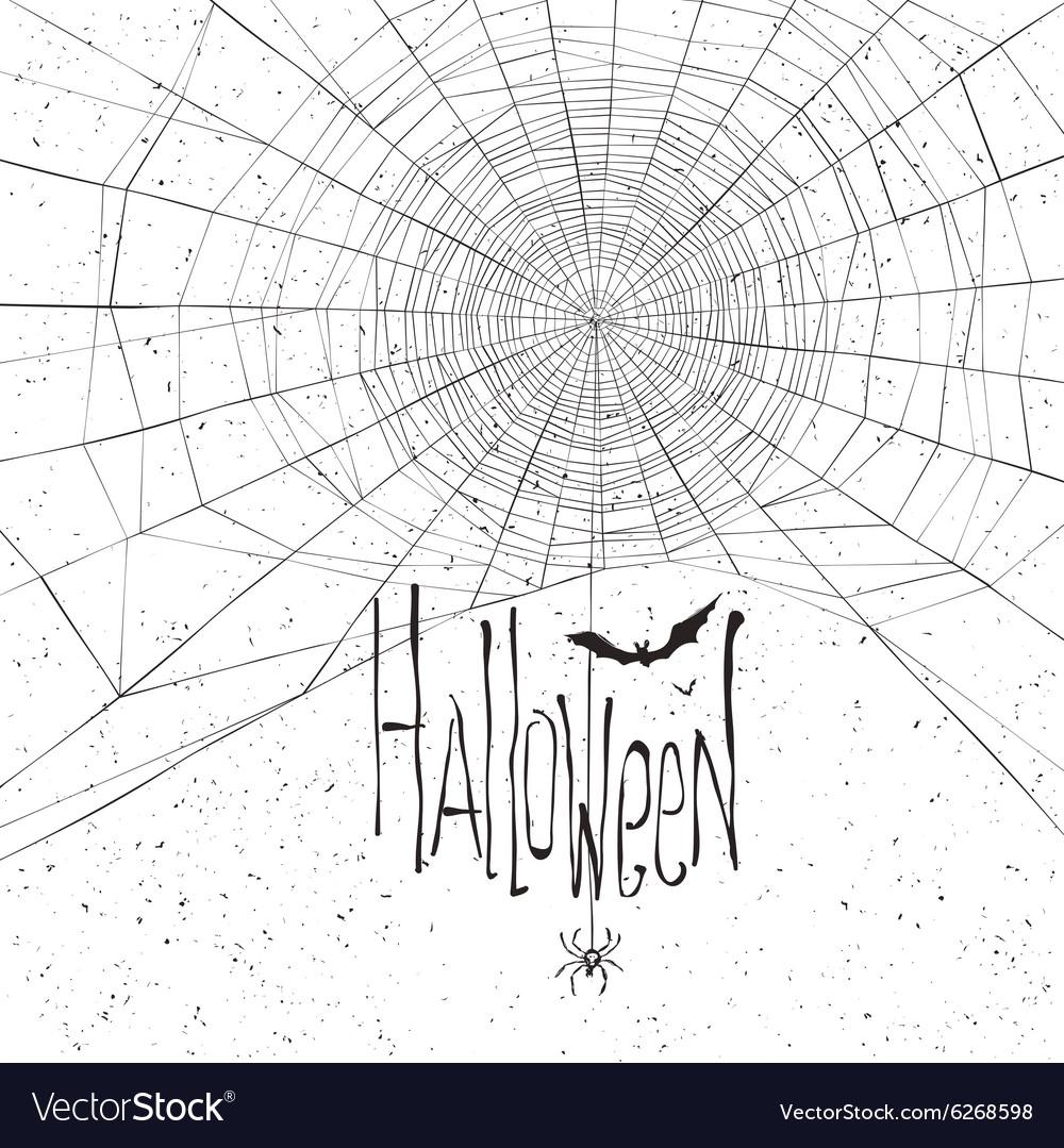 Halloween background spider web white