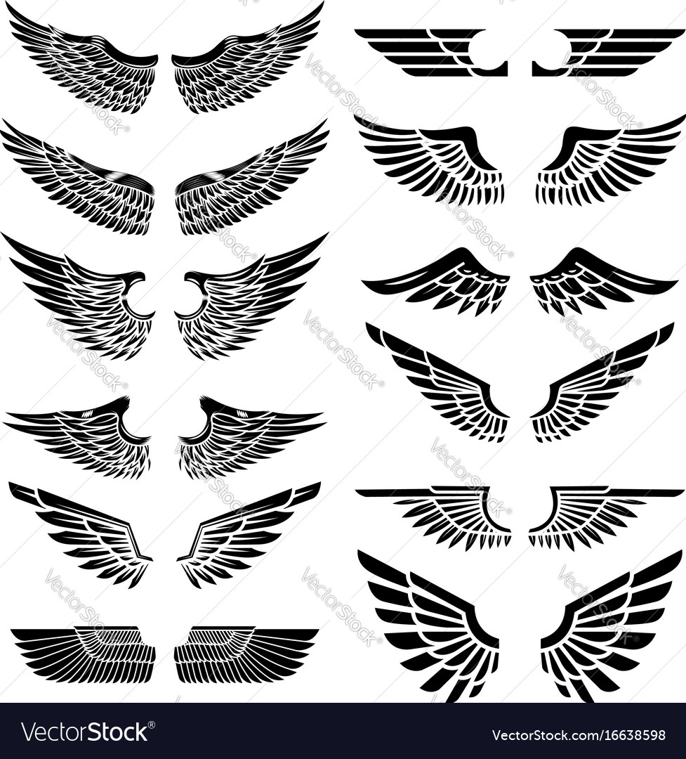 Set of the wings isolated on white background