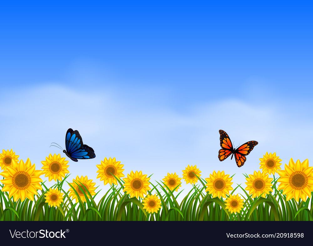 Two butterfly flying in sunflower garden