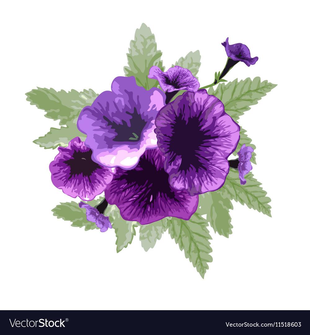 Petunia floral bouquet vector image
