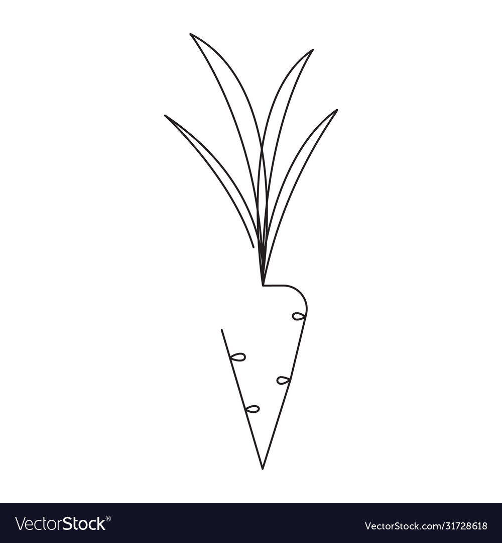Carrot editable continuous line