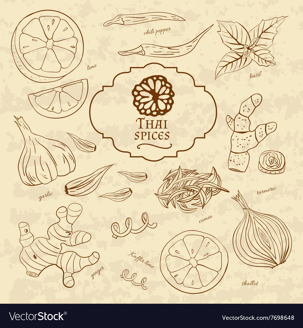 Set of spices cuisines of Thailand on old paper in