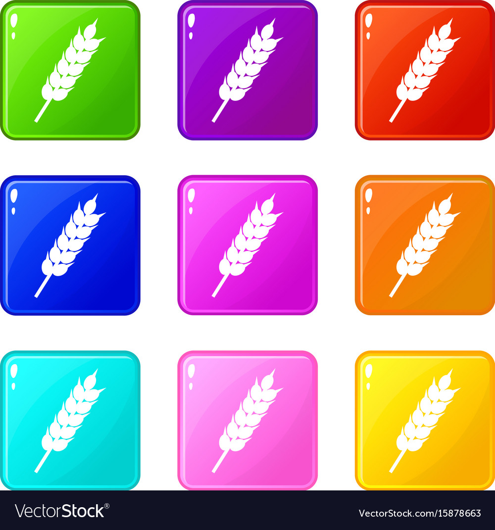 Dried wheat ear icons 9 set vector image