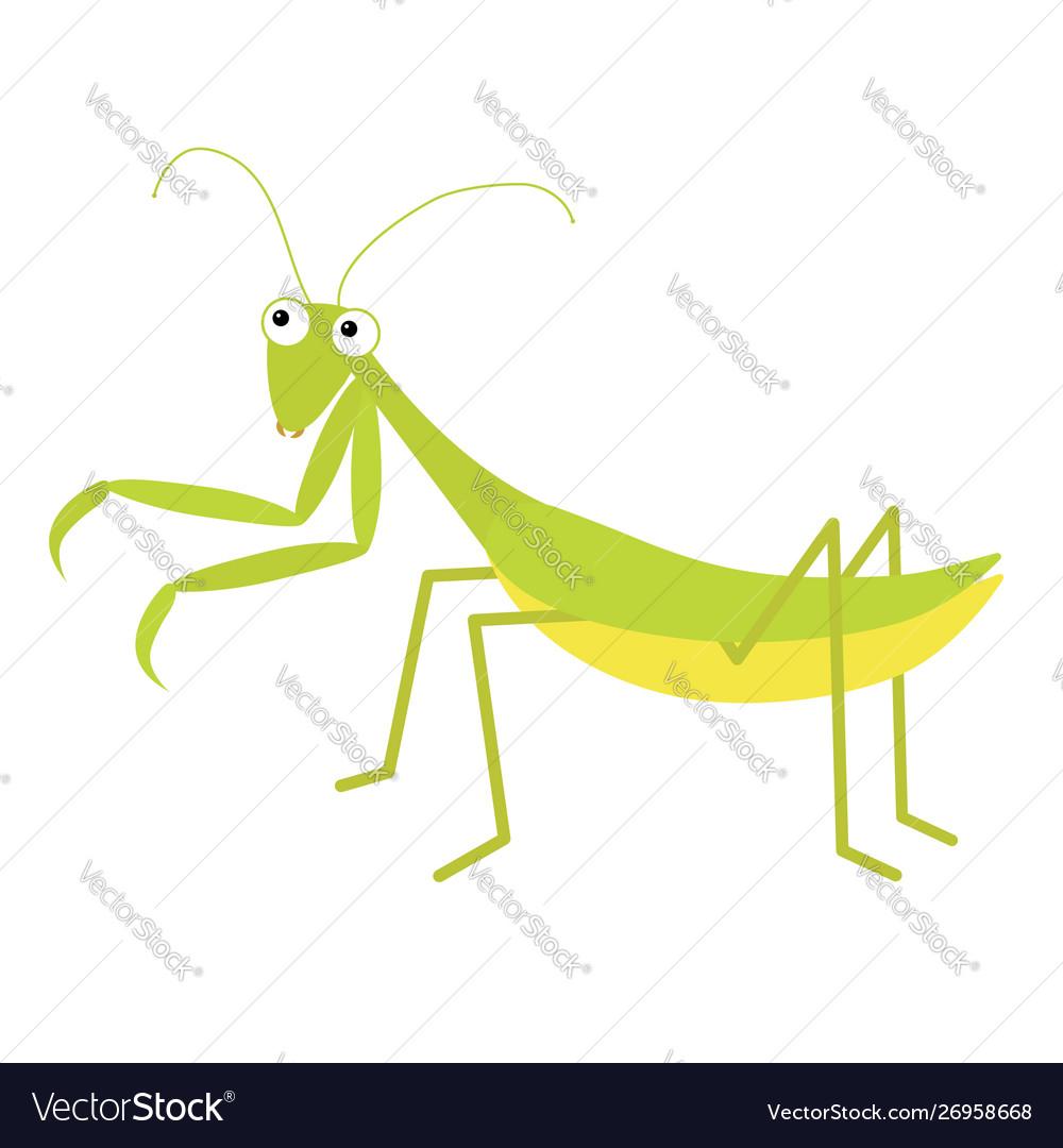 Mantis icon cute cartoon kawaii funny character