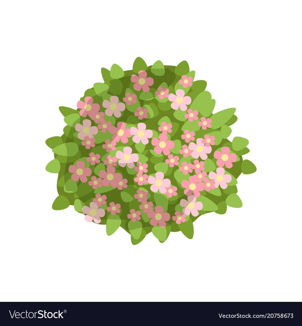 Green Bush With Pink Flowers Landscape Design Vector Image