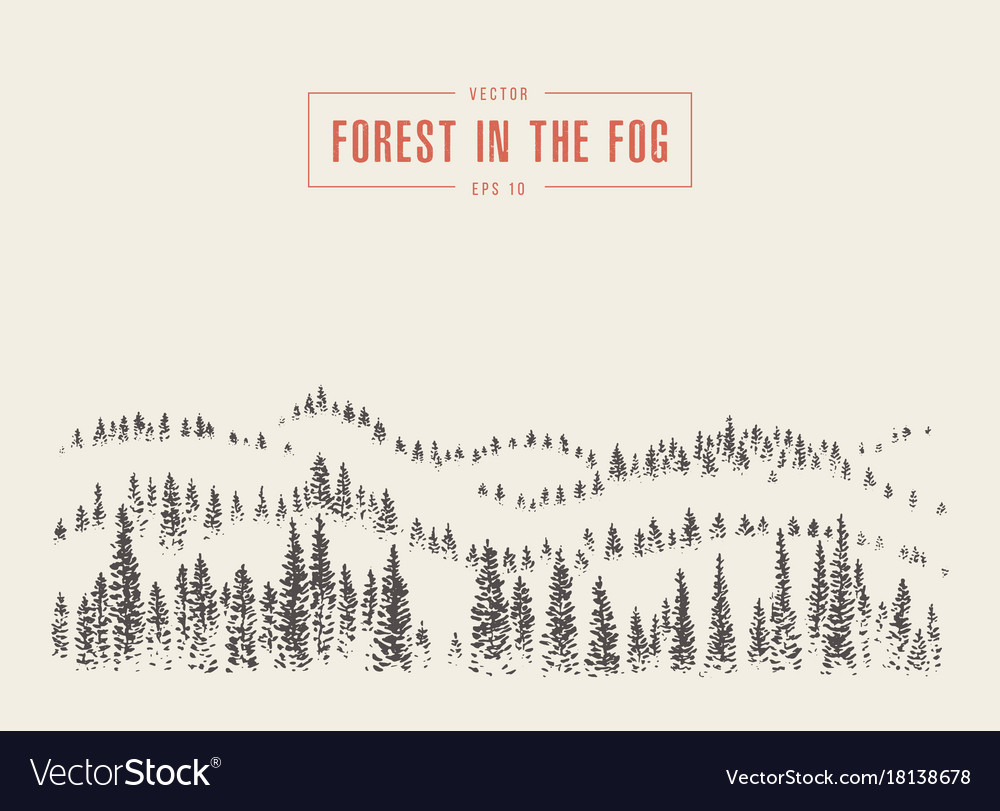 Misty fog pine forest mountain drawn sketch