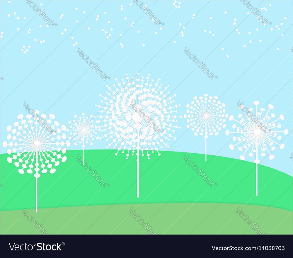 Dandelion flower field