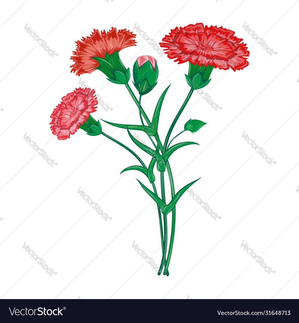 Red carnation or clove flower spring bouquet