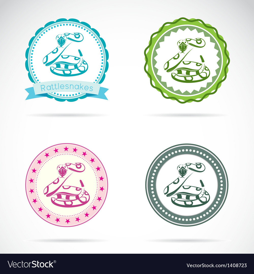 Rattlesnakes labels vector image