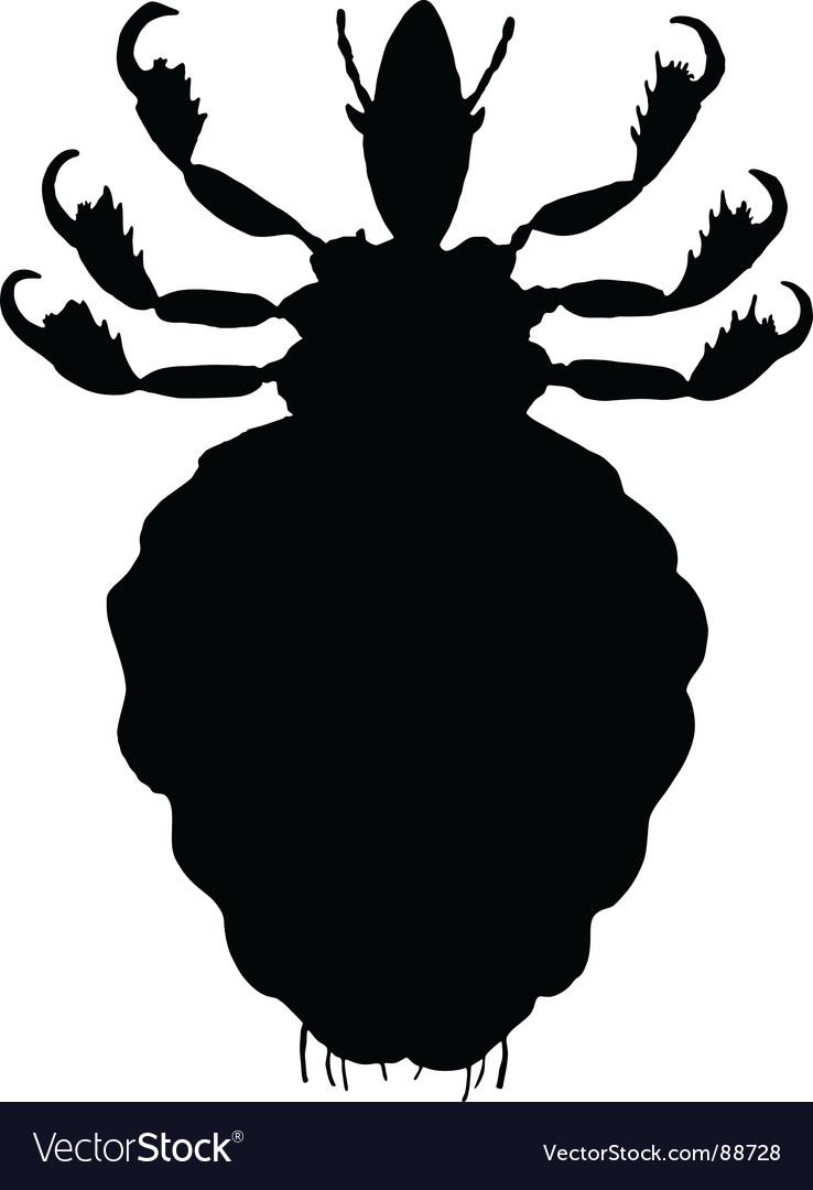 Human louse