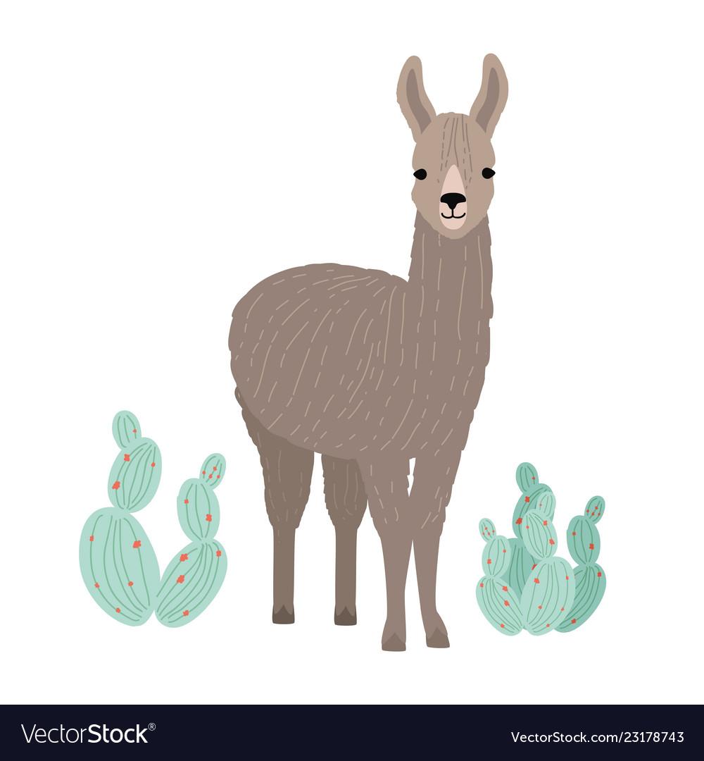 Adorable llama or cria isolated on white
