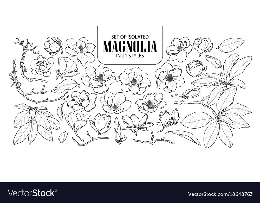 Set isolated magnolia in 21 styles cute hand
