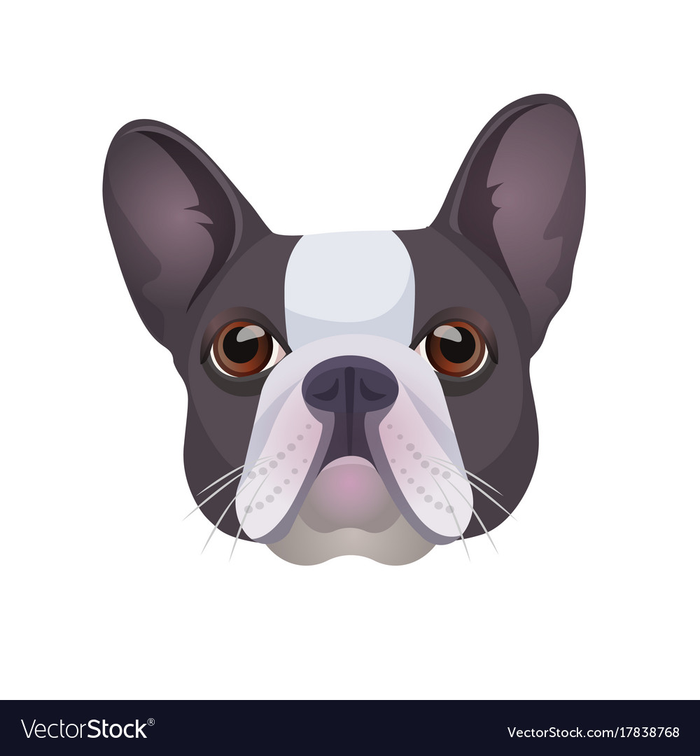 Bulldog face colored in grey and white