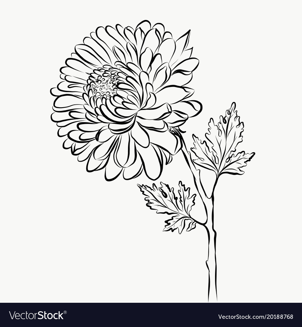 Lovely Isolated Big Flower Sketch Grafical Paint Vector Image,Boneless Ribs In Oven