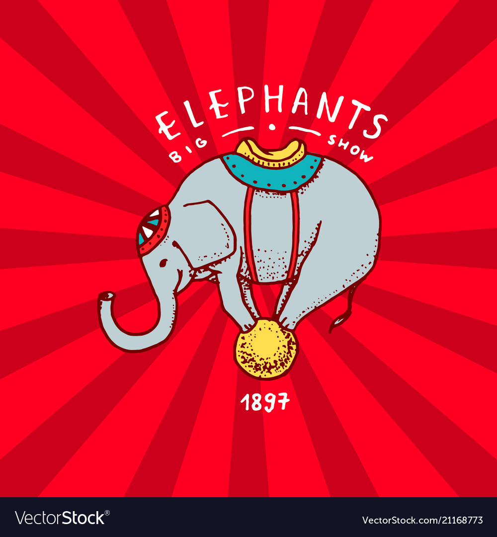 Circus elephant badge performance on the ball
