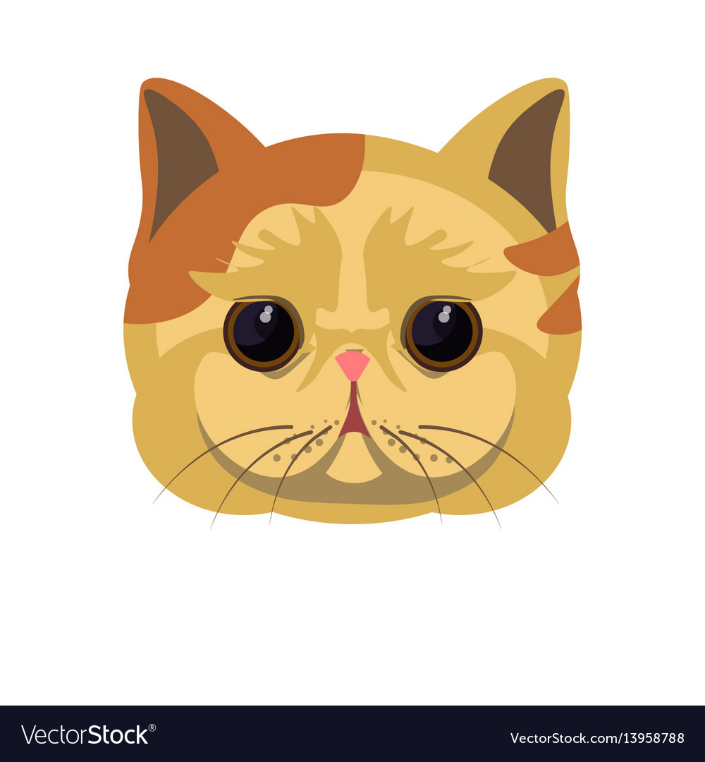 Exotic shorthair kitten in beige color with spots vector image