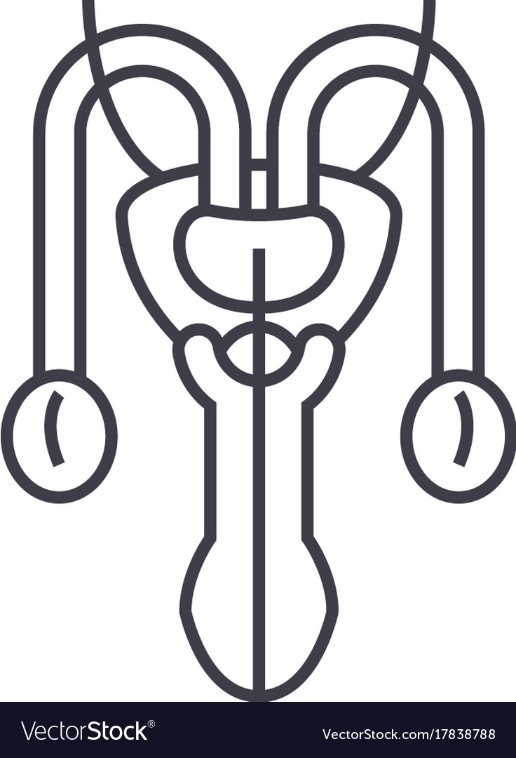 Male sexual organs line icon sign