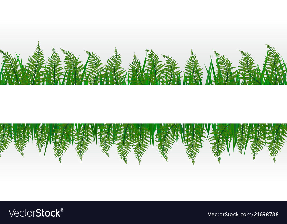 Tropical floral fern bacground with copyspace for