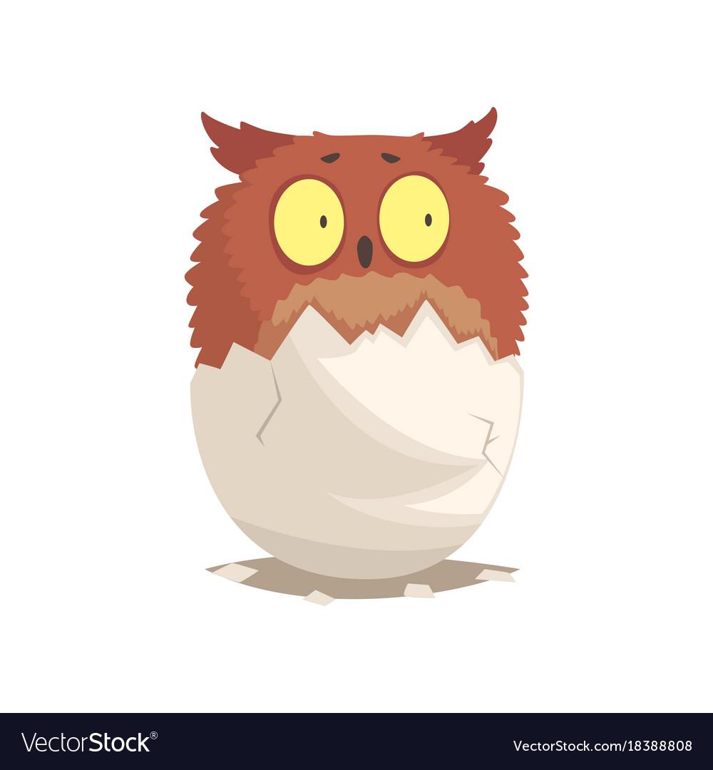 Adorable newborn brown owlet in broken egg shell
