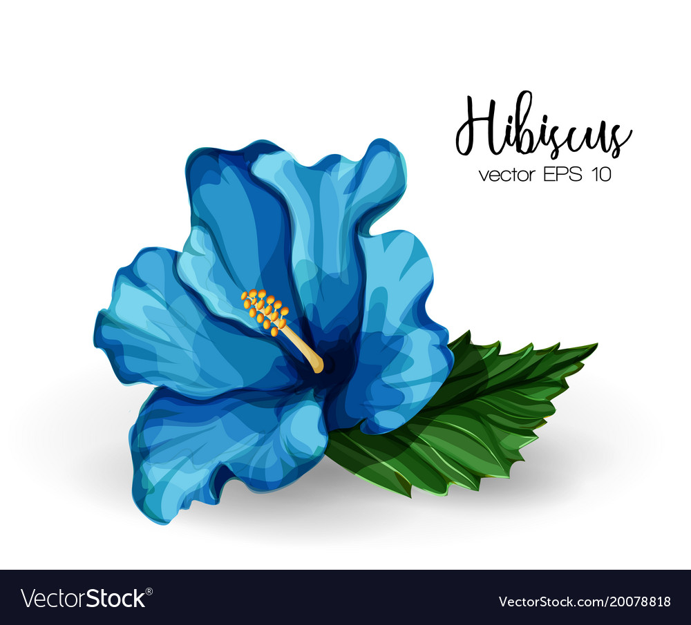 Realistic Hibiscus Flower Leaves Blue Royalty Free Vector