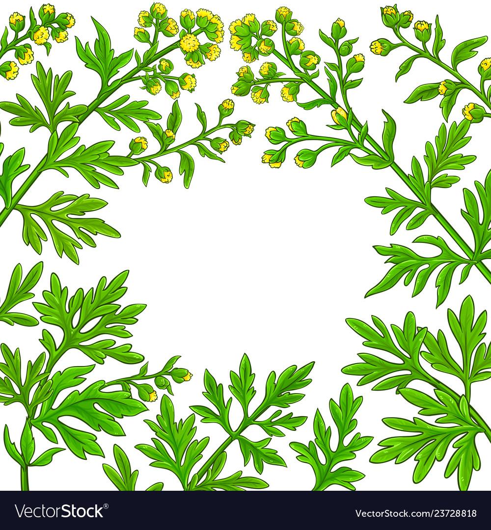 Wormwood plant frame on white background