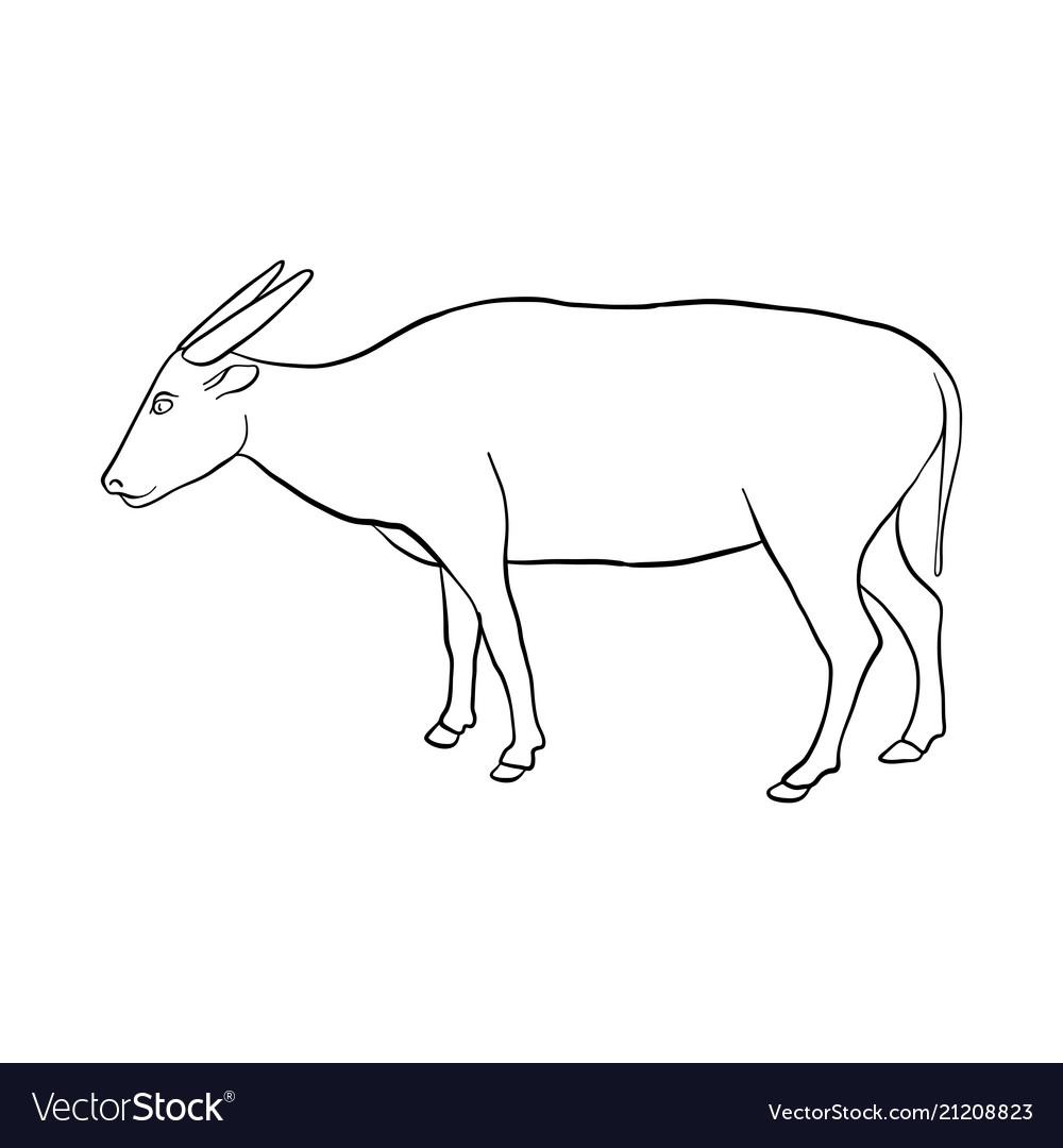 Drawing buffalo