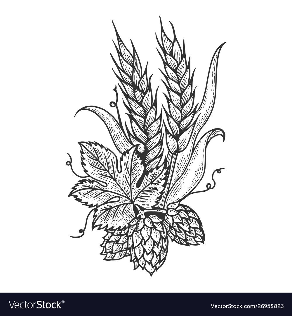 Hops and barley sketch engraving
