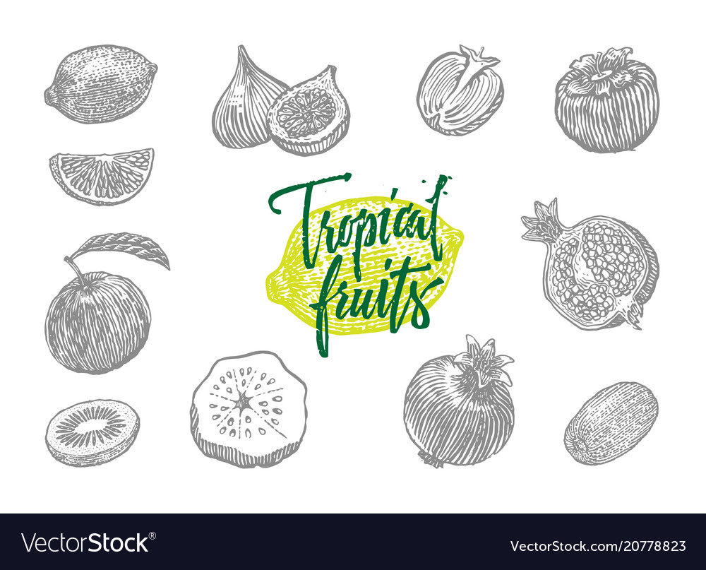 Tropical fruits icon set