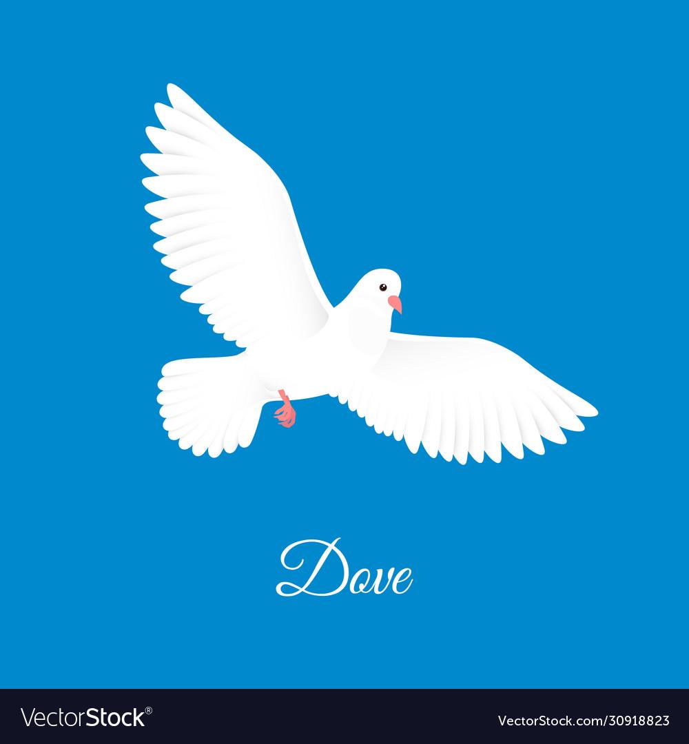 White dove free bird in sky paper pigeon