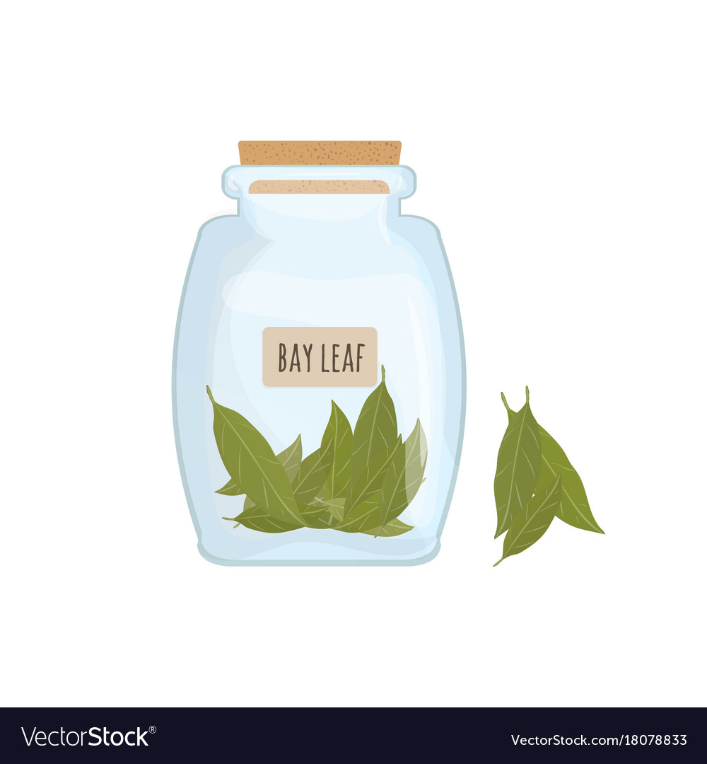 Dried bay leaves stored in clear jar isolated on
