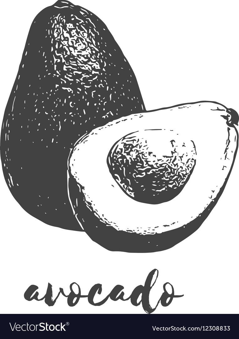 Organic avocado fruit